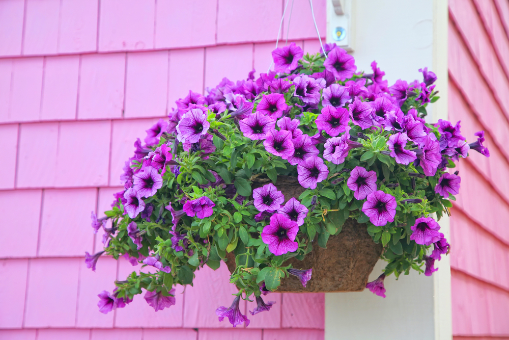 How To Plant The Perfect Hanging Baskets Poundstretcher