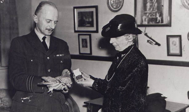 Creating a gold medal for brave animals saw the PDSA recognising them for their service during the war