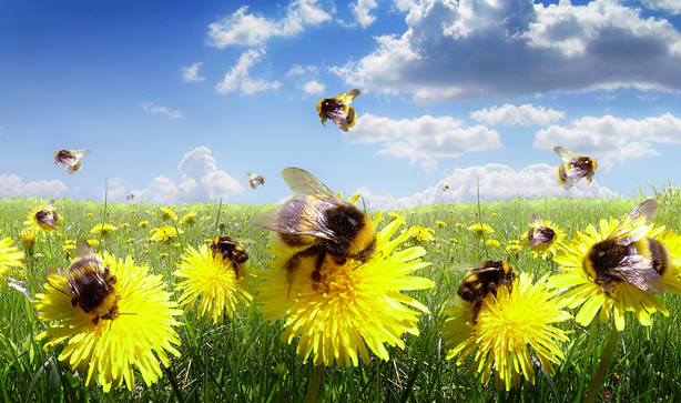 Attract bees to your garden with our seed mixes.