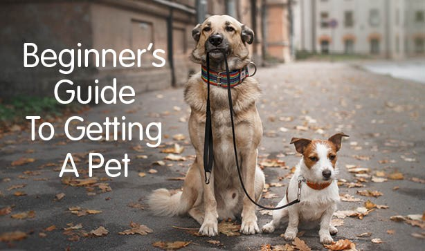The Ultimate Beginners Guide To Getting A Pet