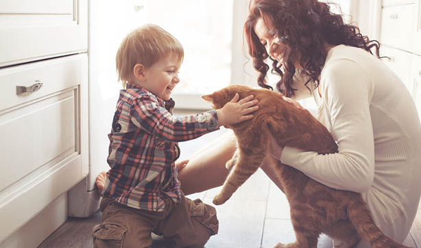 Will a pet fit in to your lifestyle? Read our blog to find out.