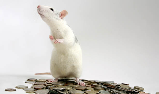 Take advice from the money rat and see if your budget is ready for a pet. The Pet Hut have some wonderful discounts on big brand pet supplies.