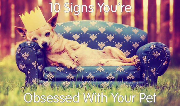 10 Signs You're Obsessed With Your Pet
