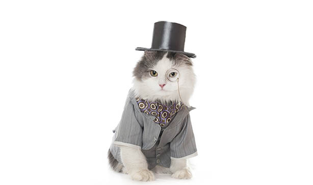 Cat with a top hat and suit.