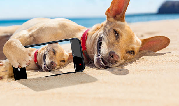 Dogs taking selfies? Wow!