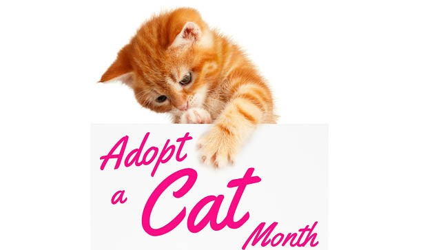 What's New Pussycat? It's Adopt A Cat Month!