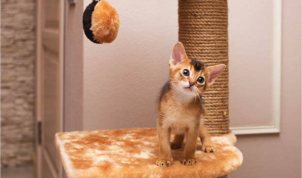 A small kitten on a scratch post cat toy