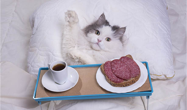 A cat enjoying breakfast in bed