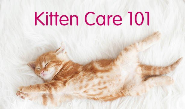 Your Guide To Kitten Care 101
