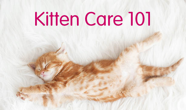 gabapentin for cats with kidney disease