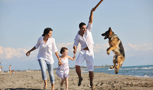 A family all dressed in white playing with their pet German Shepherd Alsatian dog on the beach