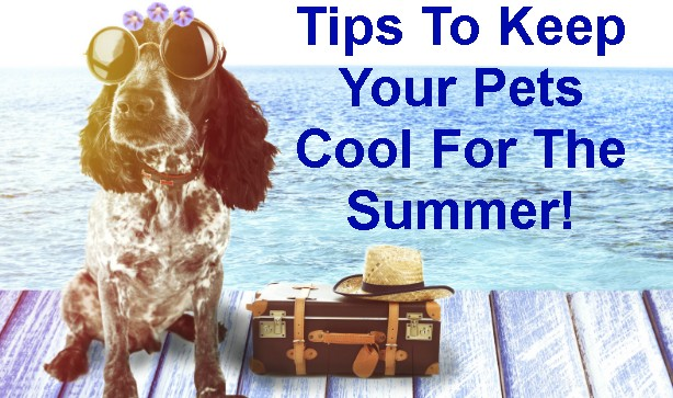 Tips To Keep Your Pets Cool For The Summer