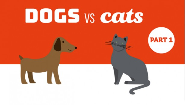 Dogs Vs Cats: Which Would You Choose?