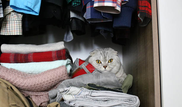 Cat looking angry in wardrobe with folded up clothes