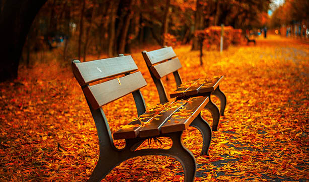 A park bench surrounded by Autumn leaves