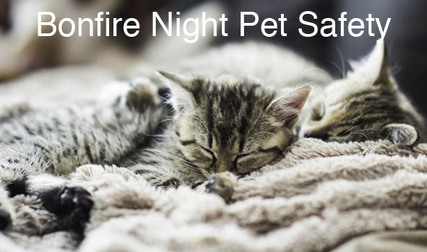 How To Keep Pets Calm on Bonfire Night
