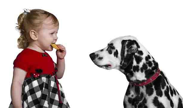Child eating biscuit while Dalmatian dog watches