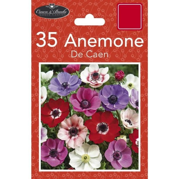 A packet of Anemone de Caen bulbs