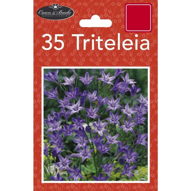 A packet of Triteleia seeds from Poundstretcher